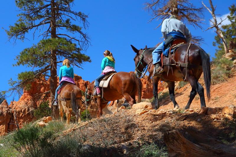 IMG_4957 Mule Ride