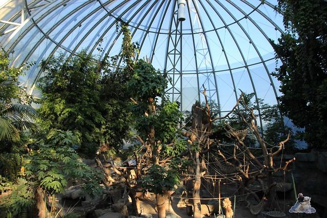 Tierpark Hagenbeck Dschungelnacht 06.05.2015   99