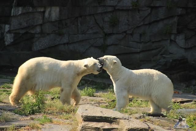 Tierpark Berlin 13.06.2015   8
