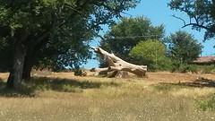albero marmo