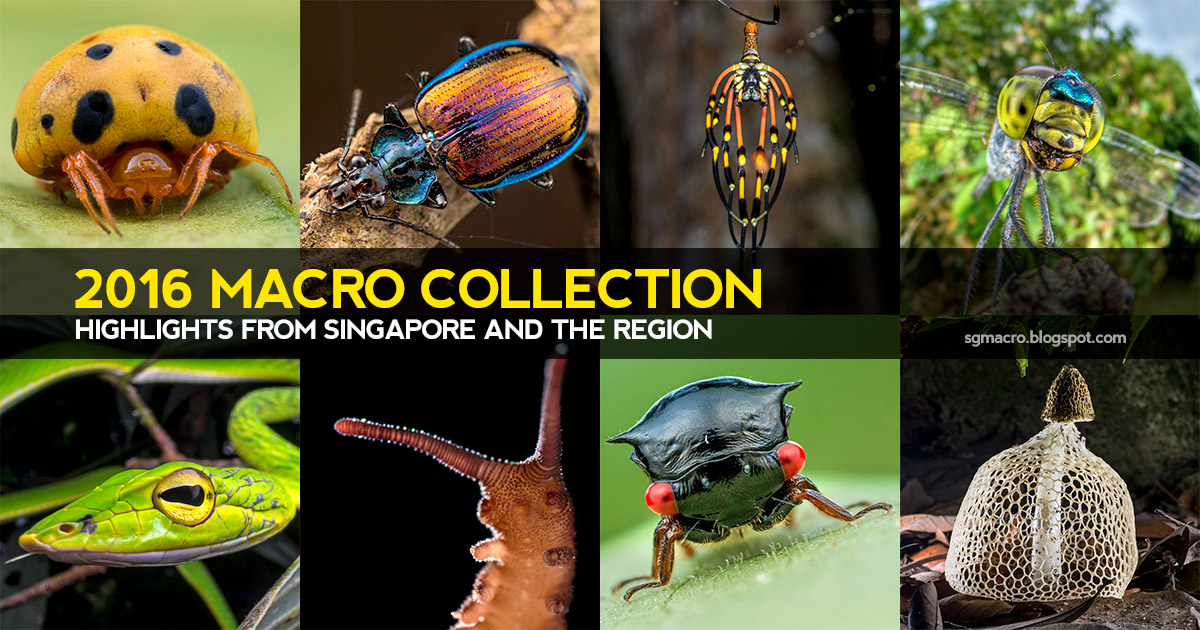 2016 Macro Collection: Highlights from Singapore and the Region