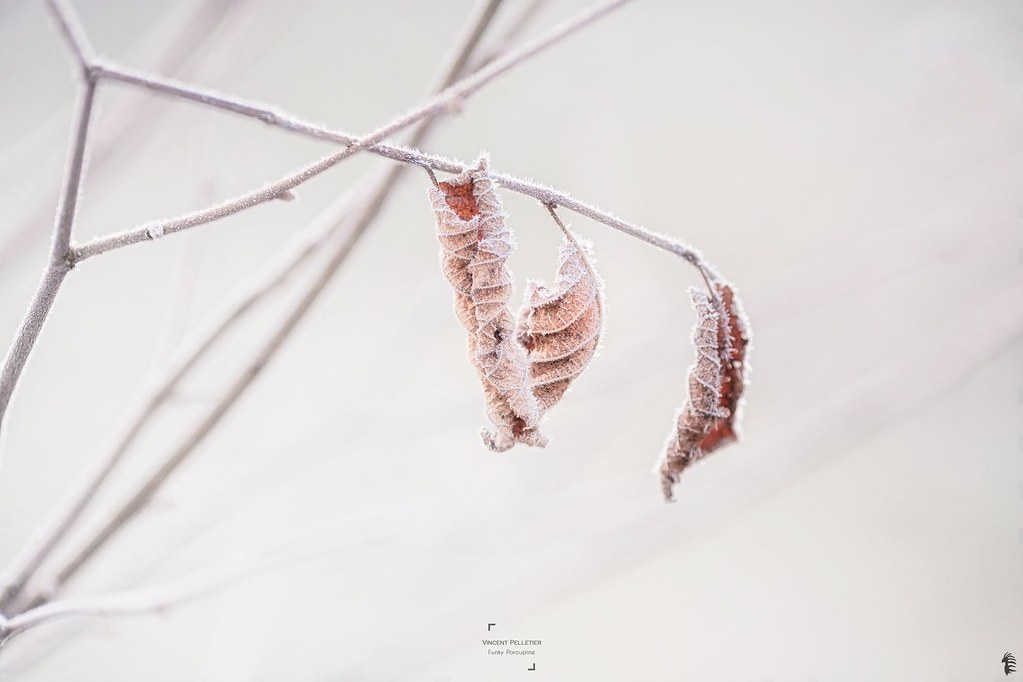 How I find interest to photography frozen leaves