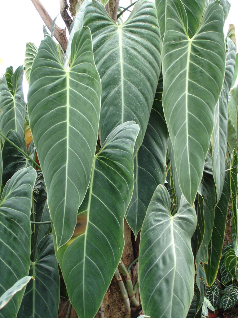 Lovely Uk Tropical Plants Part - 4: ... Tropical Plants | By Allispossible.org.uk