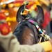 Marwari Cavalry - Rajasthan [Going Places Magazine]