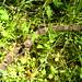 Warner Park Snake