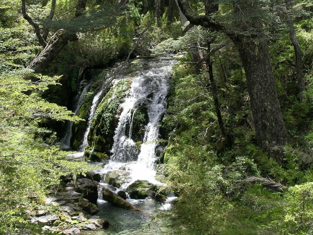 Resultado de imagen para El Bosque Andino