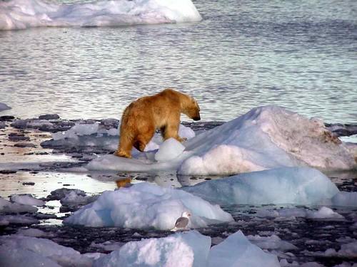 Polar Bear Ice Cream Cake