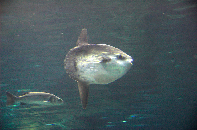 Funny Looking Fish | F...