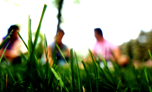 Class in the Grass | by scotersen