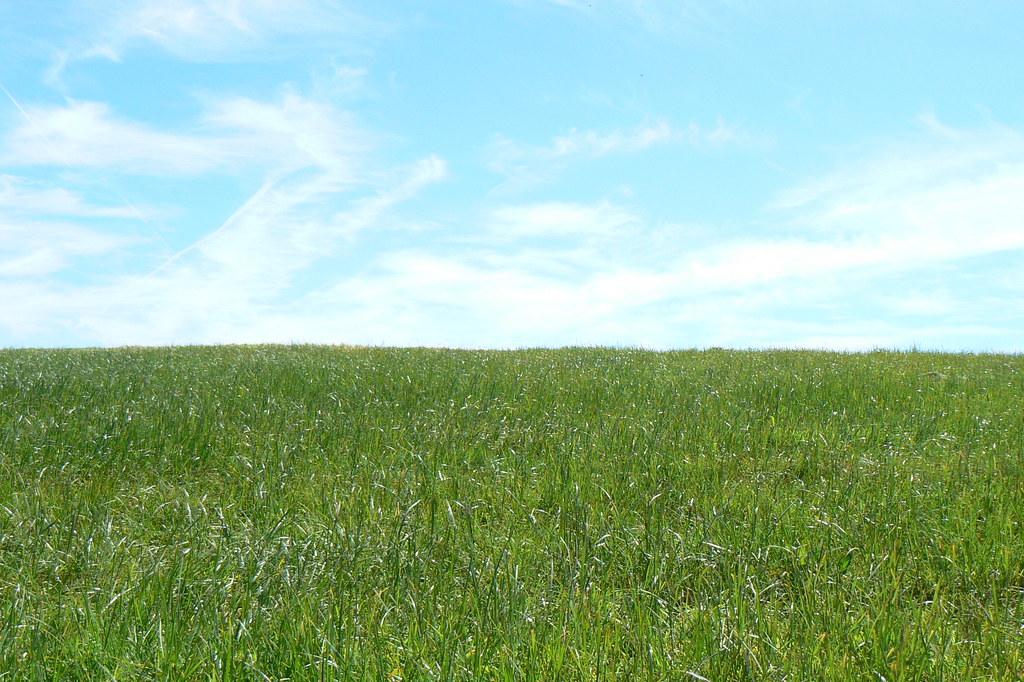Grass Sky Peter Flickr
