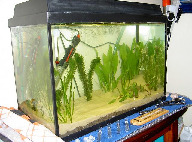 Fish tank planted explore egmel 39 s photos on flickr for Fish tank camera