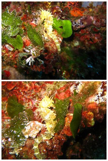 Elba Unterwasser 2015 2015-06-074