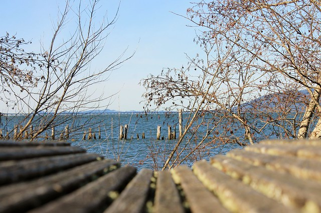 Bench and Pilings