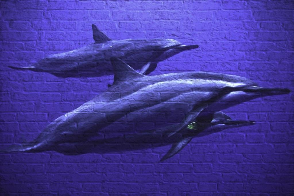 Dolphins-Street Art