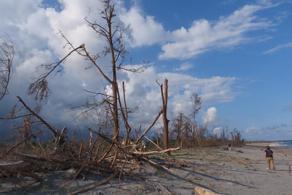 20160730尼伯特後防風林。荒野保護協會台東分會提供
