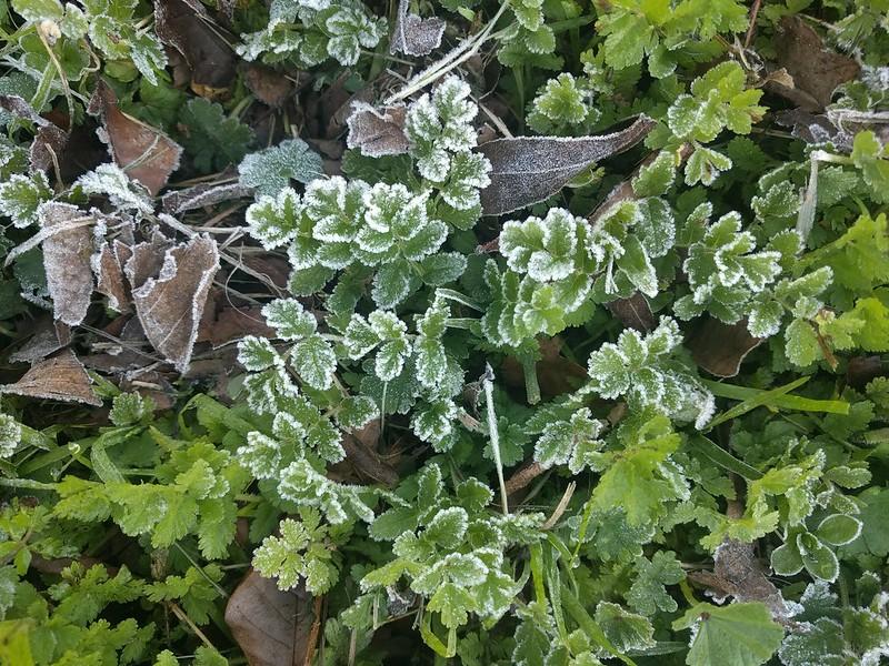 Frost in Israel