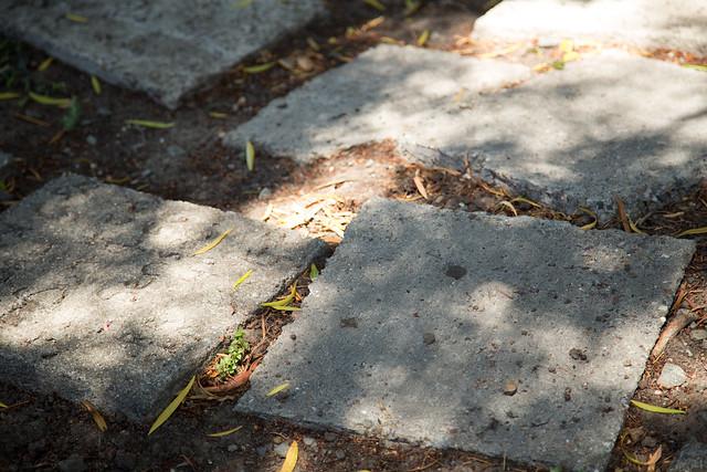 Garden - Earth breathes deep and disturbs the steps