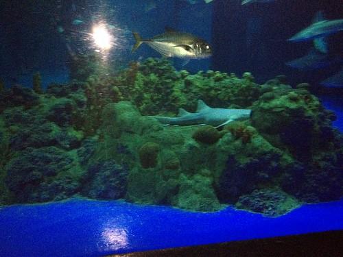 Aquarium Seaworld San Antonio Tx Mdhinhouston Flickr