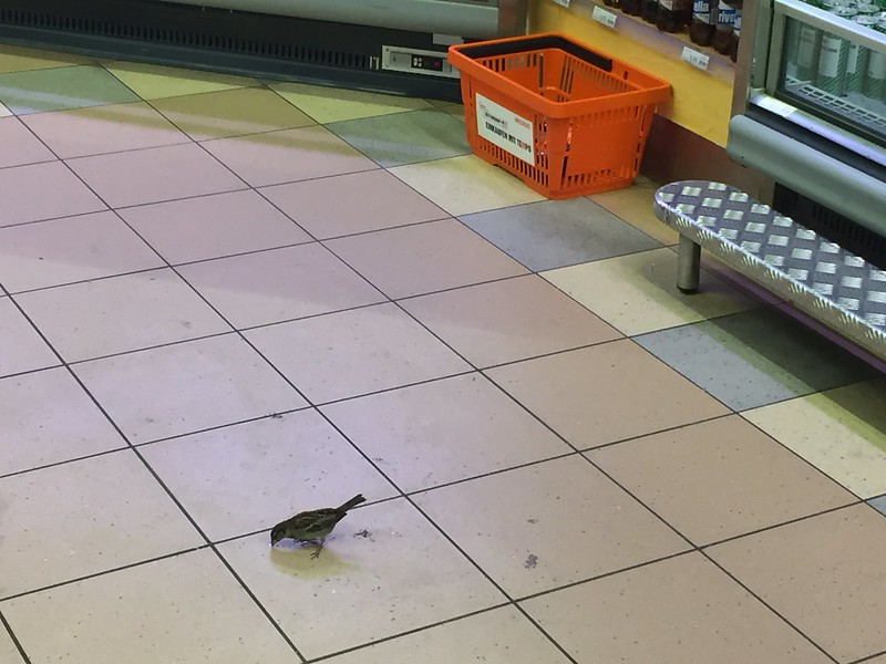 Sparrow in supermarket