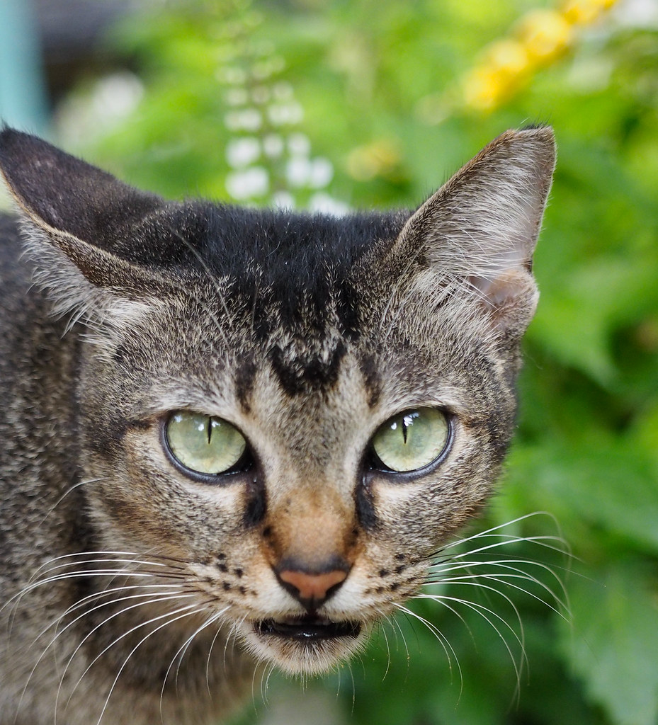 Cat encounter at KLCC Lake