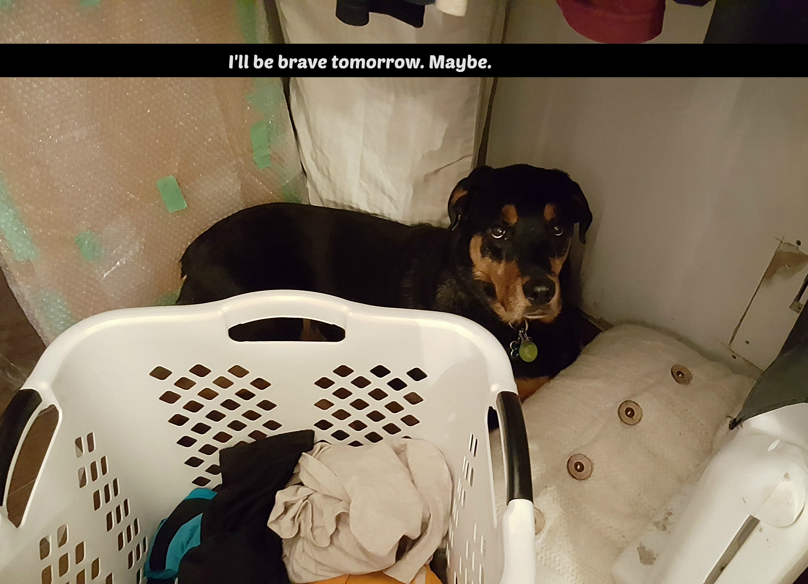 Rottweiler in a closet  :-)