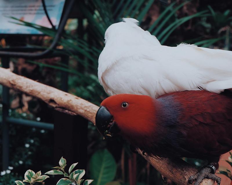Malagos Garden Resort Photos