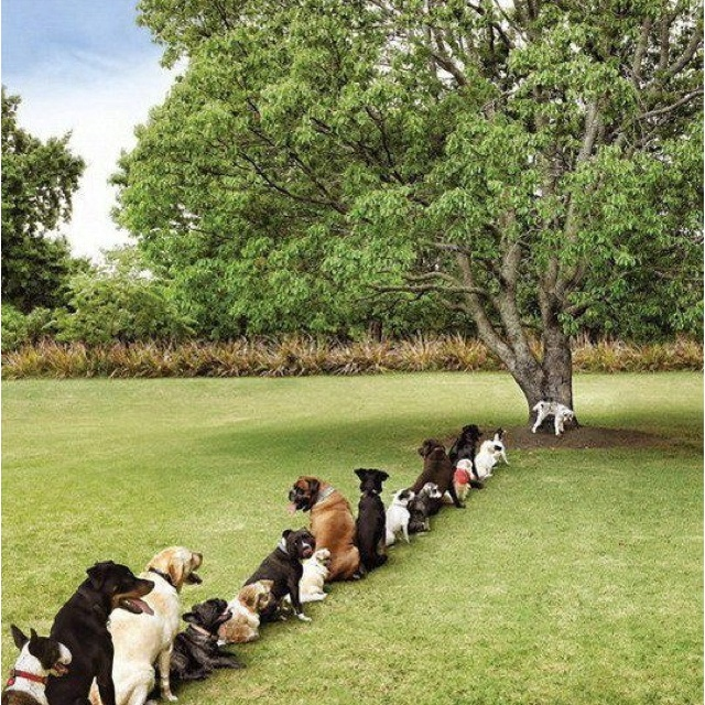 Doggy Bathroom Line