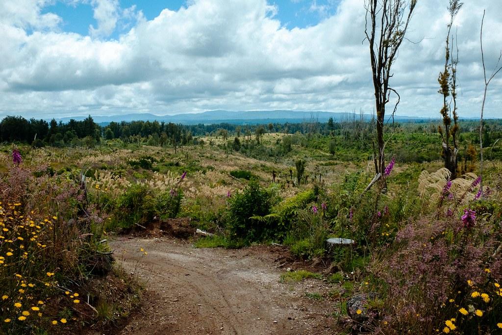 170113_Rotorua to Nat Park -44