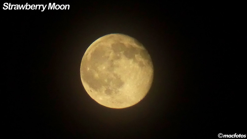 Strawberry Moon | June