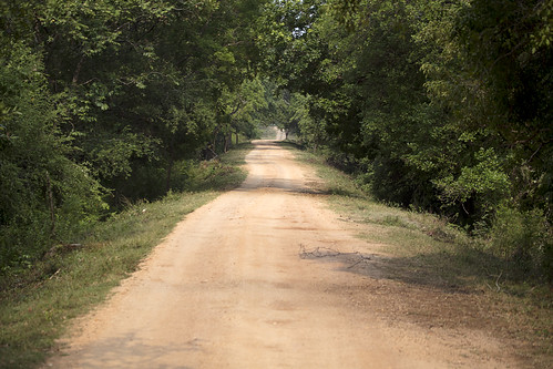 Road into the reserve