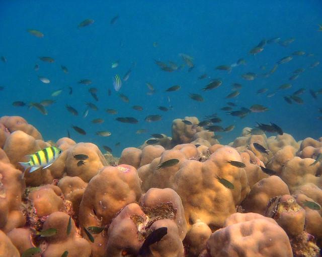 Fondos marinos haciedo buceo en las islas phi phi