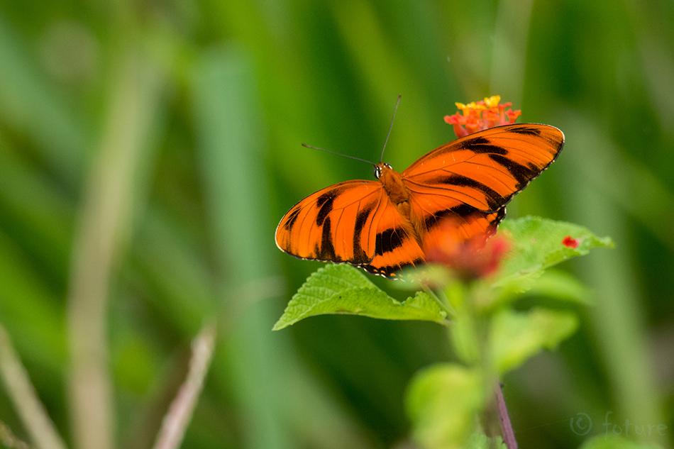 Tropical butterfly, Caño Negro, Costa Rica, Kaido Rummel
