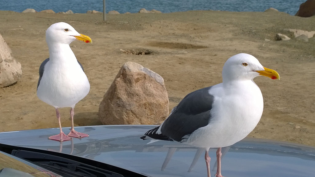 Gulls_from_inside