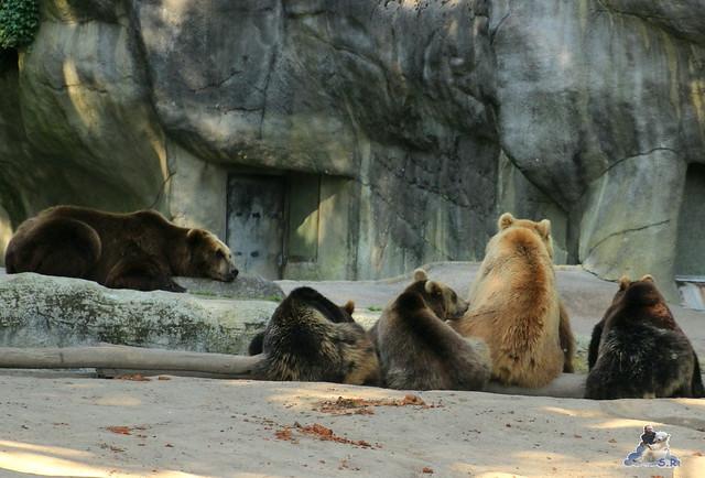 Tierpark Hagenbeck Dschungelnacht 06.05.2015   47