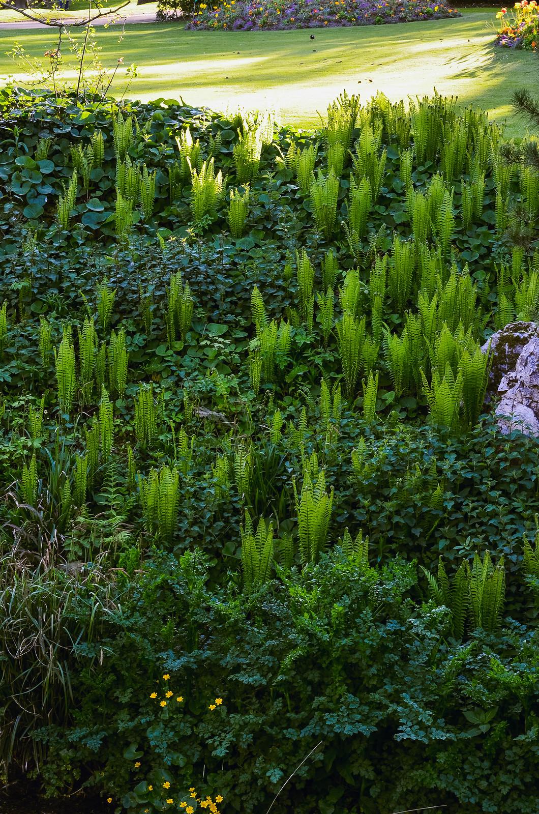 Végétation Jardin des plantes Nantes
