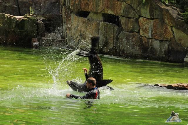 Zoo Berlin 19.06.   201537