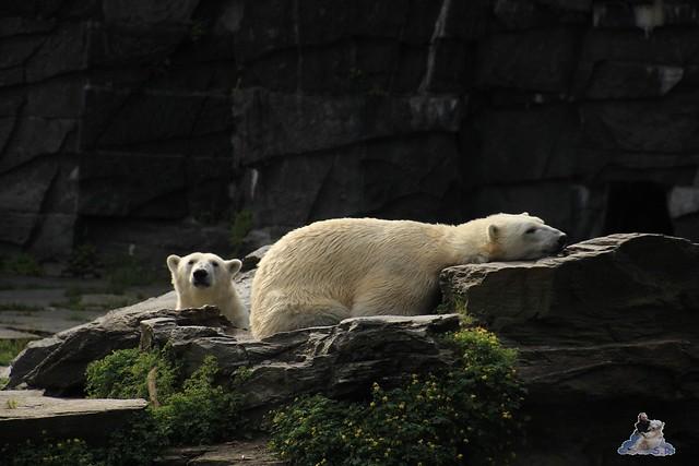 Tierpark Berlin 24.06.2014  6