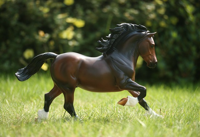EA Fantastic Mr Copperfox - Welsh Cob - stallion - OF - EG1