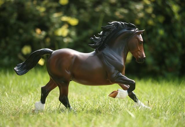 EA Fantastic Mr Copperfox - Welsh Cob - stallion - OF - EG1