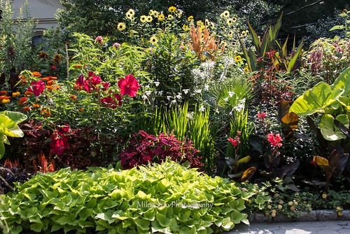 Snug Harbor Botanical Garden By Mikajc
