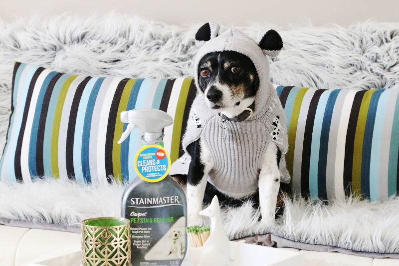 stainmaster-carpet-pet-stain-remover-2