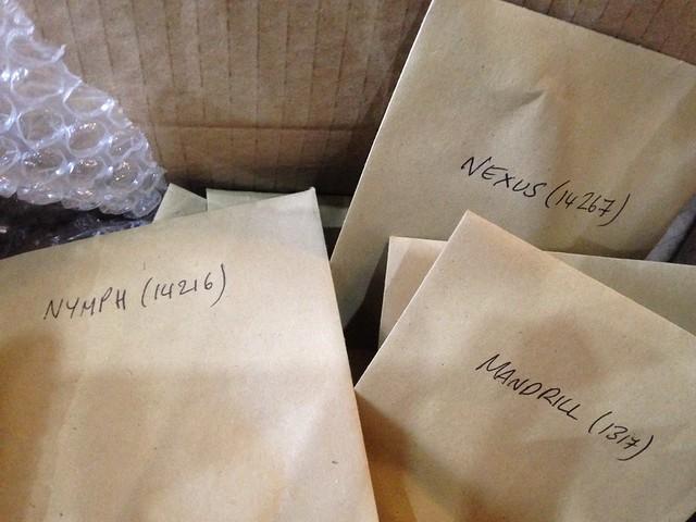 New oca varieties