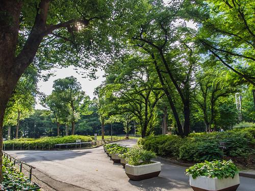 Shinjuku Central Park #1