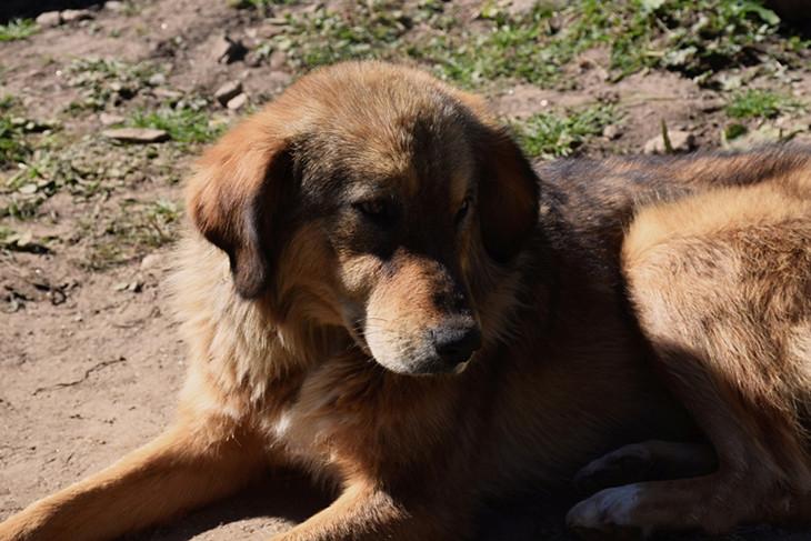 Best Floppy Ears Brown Adorable Dog - 30776157853_886803725c_b  2018_472876  .jpg