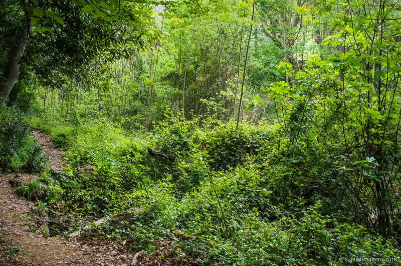 Selva a orillas del río Glorieta