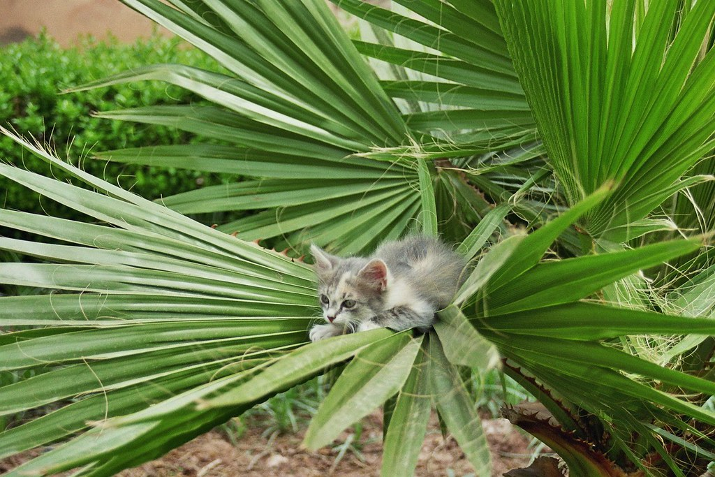 And a cat in a tiny palm tree... | Dumbest title yet ...