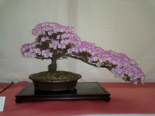 Sacramento 60th Annual Bonsai Show | by misterjustin