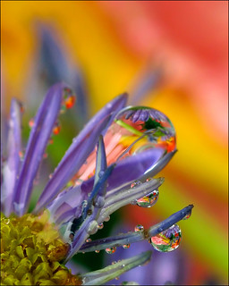 droplets(through the looking glass) | by Amery Carlson