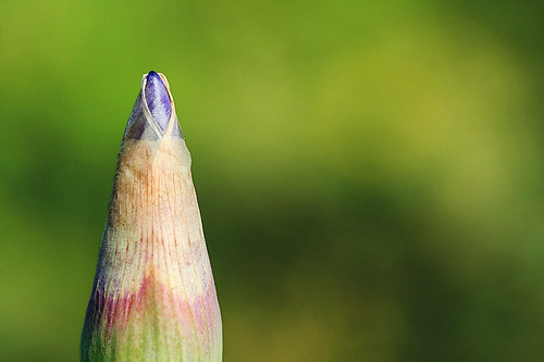 natural pencil (look twice, please!) | by Rosina