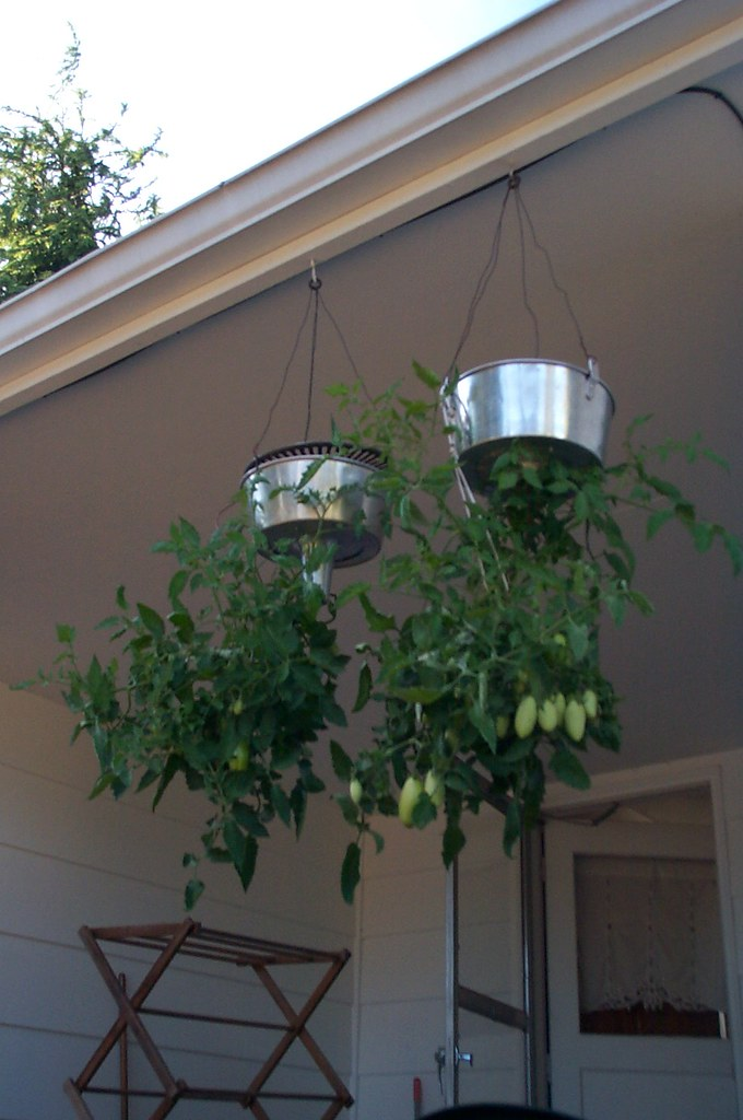 Upside Down Tomato Planter System See More Of My